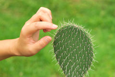 Hand touch cactus Stock Photography