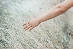 Hand touch dry grass in the meadow on abstract pastel color Stock Image