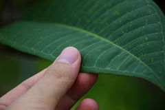 Hand touch a green leaf. take care of nature. Stock Photography