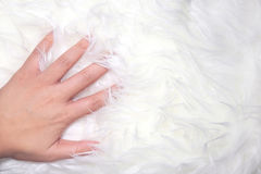 A hand touch white fur. A hand touch on white fur carpet so gentle, background image Royalty Free Stock Photos