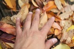 Hand touches leaves on the deck Stock Image