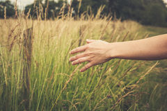 Hand touching crops in field Royalty Free Stock Image