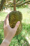 The hand touching durian fruit Stock Photography