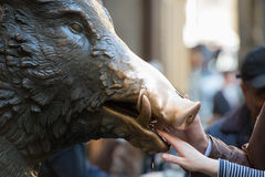 Hand touching fortune boar in Florence Royalty Free Stock Photos