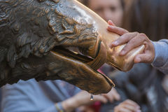 Hand touching fortune boar in Florence. Detail of Hand touching good luck copper pig statue in Florence Royalty Free Stock Photos
