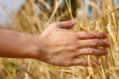 Hand touching the grass Royalty Free Stock Images