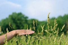 Hand touching grass Royalty Free Stock Photography