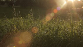 Hand Touching Grass Evening Sun Lens Flare stock footage