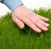 Hand touching grass Stock Images