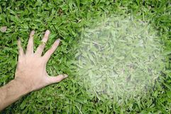 Hand touching green grass Royalty Free Stock Photos