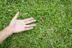 Hand touching green grass field Royalty Free Stock Photography