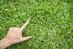 Hand touching green grass field Stock Photos