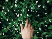 Hand touching green grass with white flowers in spring park, env Stock Photos