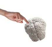 Hand touching human brain Stock Image