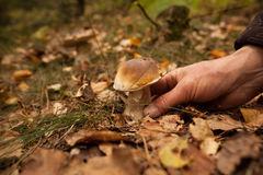 Hand touching mushroom on forest ground Stock Image
