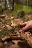 Hand touching mushroom on forest ground Royalty Free Stock Photography