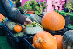 Hand touching organic pumpkins at a farmers' market Stock Photography