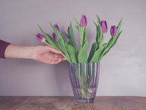 Hand touching purple tulips in vase Stock Images