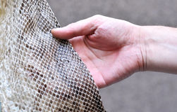 Hand touching a Python Snake skin. ( Python reticulatus Royalty Free Stock Photo