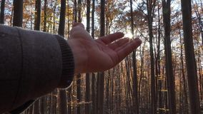 Hand touching the sun shinning in autumn forest