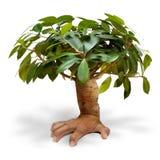 Hand tree Stock Photos