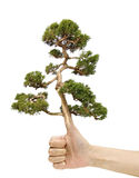 Hand and tree Stock Images