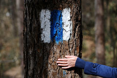 Hand on a tree bark showing a hiking sign Royalty Free Stock Image
