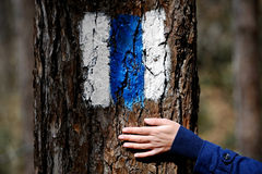 Hand on a tree bark showing a hiking sign Royalty Free Stock Photo