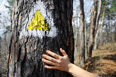 Hand on a tree bark showing a hiking sign Stock Photo
