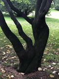 Tree seems a hand royalty free stock photo