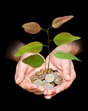 Hand with tree growing from pile of coins Royalty Free Stock Images