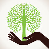 Hand tree in hand background Royalty Free Stock Images