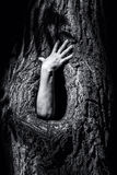 Hand in a tree hollow. Stock Images