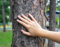 Hand on the tree trunk royalty free stock photo