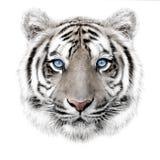 Hand-trekkend portret van een witte tijger van Bengalen Royalty-vrije Stock Foto's