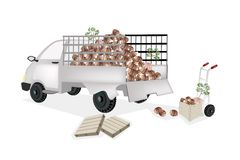 Hand Truck Loading Fresh Taro into Pickup Truck Royalty Free Stock Photography