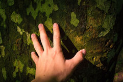 Hand on the trunk Royalty Free Stock Images