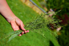 Hand with tuft of grass Royalty Free Stock Photo