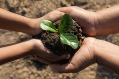 hand twee die plantend jonge boom helpen stock afbeelding