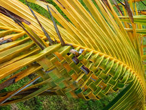 The hand-twisted palm leaf Royalty Free Stock Photos