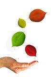 Hand u. Blätter Stockbild