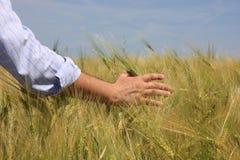 Hand u. Weizen lizenzfreies stockfoto