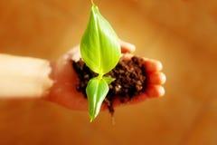 Hand und Anlage Umwelt-Konzept Bewirken Sie seitlichen 50mm Nikkor Lizenzfreie Stockfotos