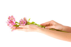Hand und Blume Stockfoto