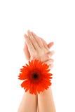 Hand und Blume Stockfotografie