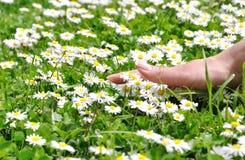 Hand und Blumen Lizenzfreie Stockfotos