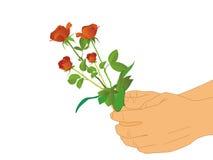 Hand und rote Blume auf lokalisiertem weißem Hintergrund Stockfoto