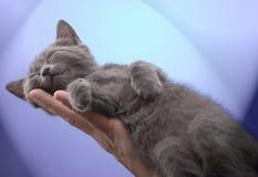 Hand und Schlafenkätzchen Lizenzfreies Stockbild