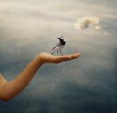 Hand und Vogel Stockbild