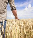 Hand und Weizen Stockfotos